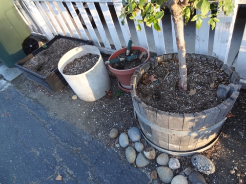 Planters on driveway