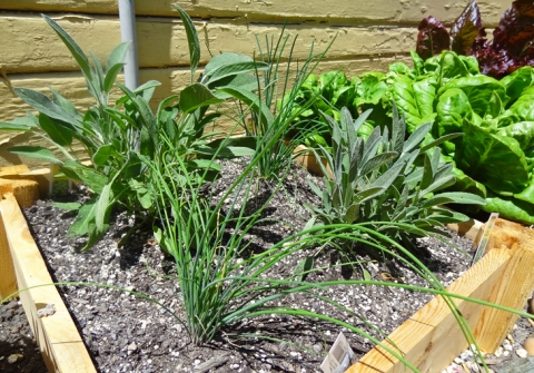 Herb box: Sage and chives
