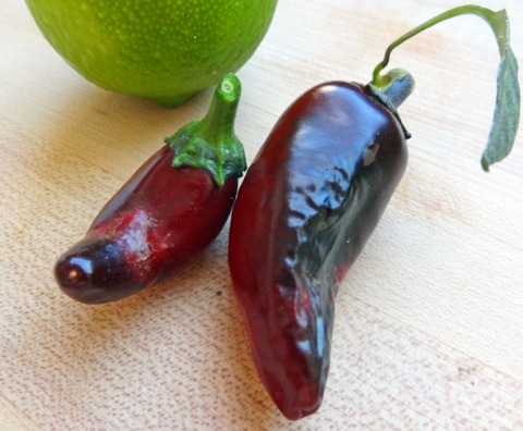 Mature purple jalapenos