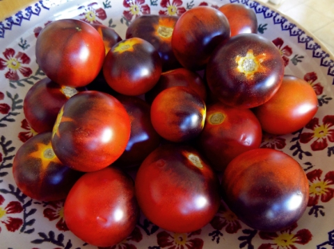 tomatoes-in-bowl