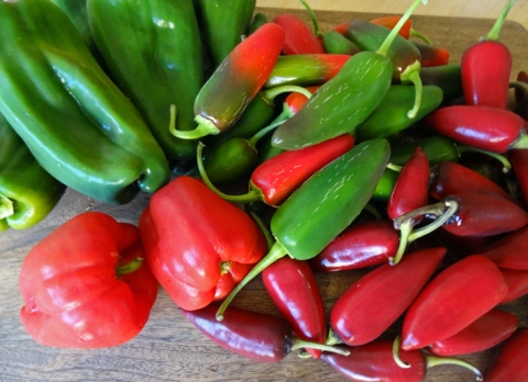 Passel of peppers: ancho chiles, jalapenos, and sweet red bells