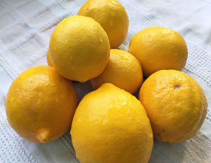 Over-the-fence Meyer lemons: local and organic