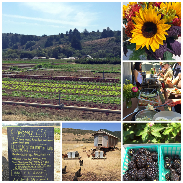A day on the farm: Fifth Crow Farm's CSA Open House