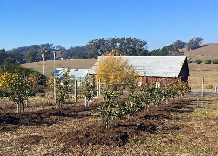 mulch-new-trees