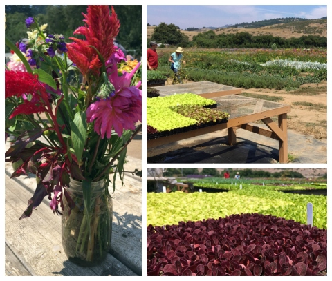 From left: an assortment of organically grown flowers, table of baby plants for salad greens, closeup of salad green starts